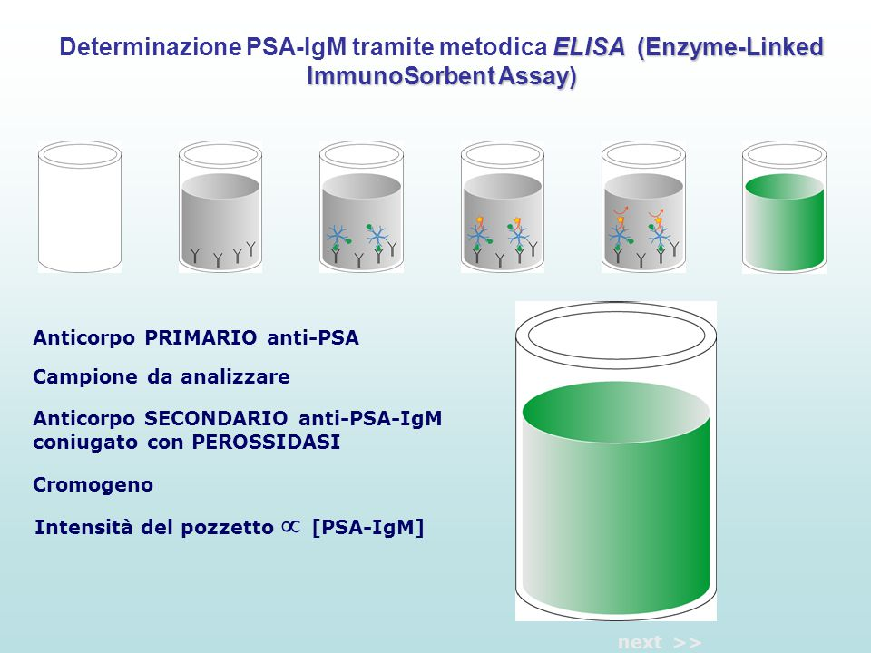 Determinazione PSA-IgM tramite metodica ELISA (Enzyme-Linked ImmunoSorbent Assay)