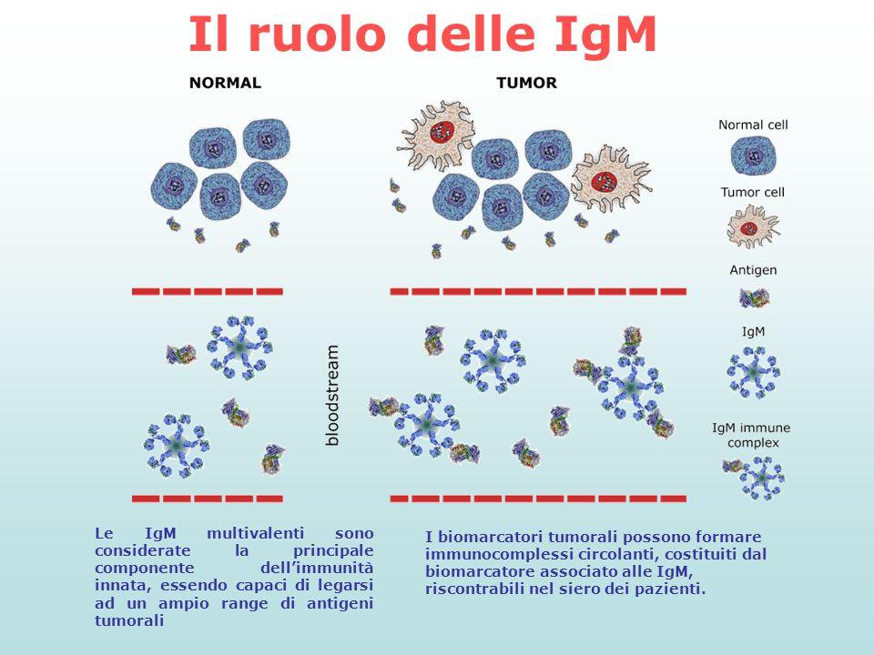 Il ruolo delle IgM