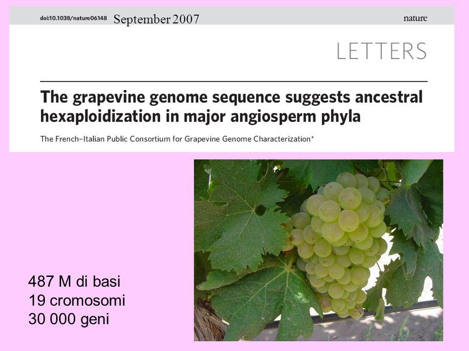 September 2007 487 M di basi 19 cromosomi 30 000 geni
