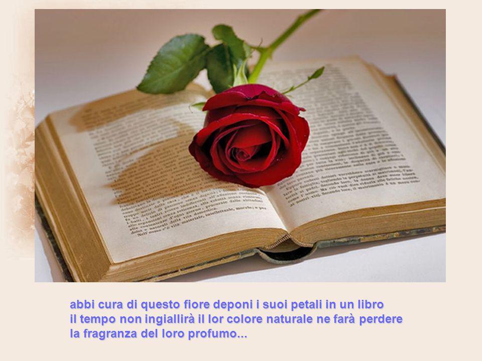 abbi cura di questo fiore deponi i suoi petali in un libro