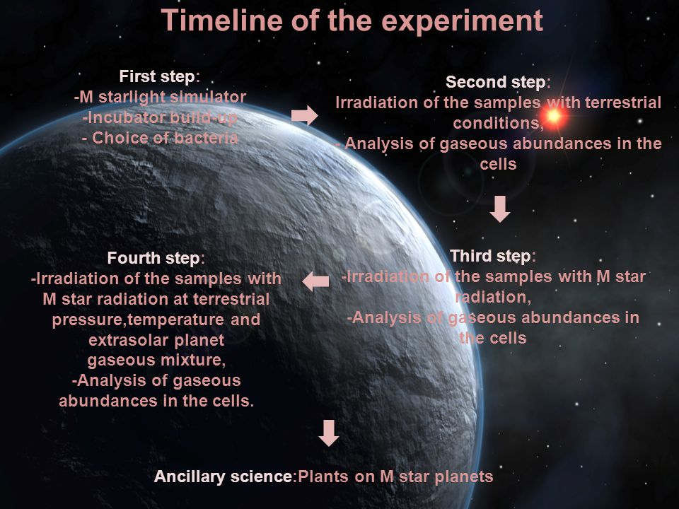 Timeline of the experiment