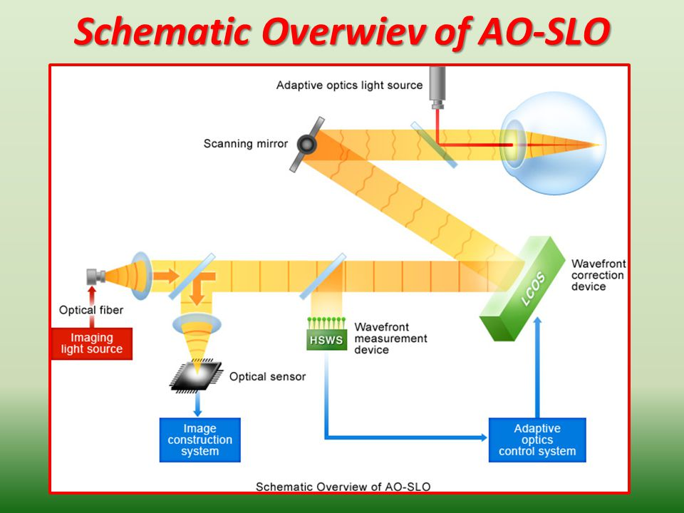 Schematic Overwiev of AO-SLO