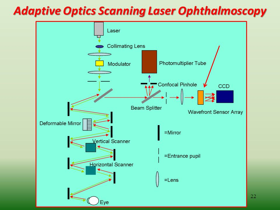 Adaptive Optics Scanning Laser Ophthalmoscopy
