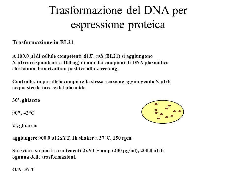 Trasformazione del DNA per espressione proteica