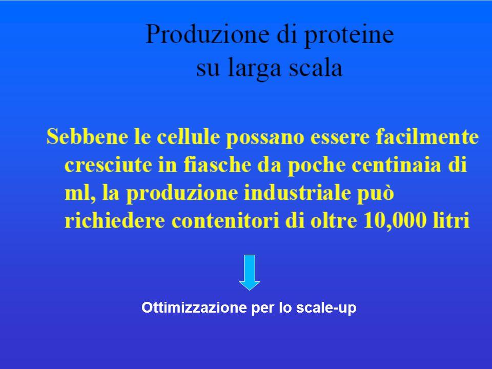 Ottimizzazione per lo scale-up