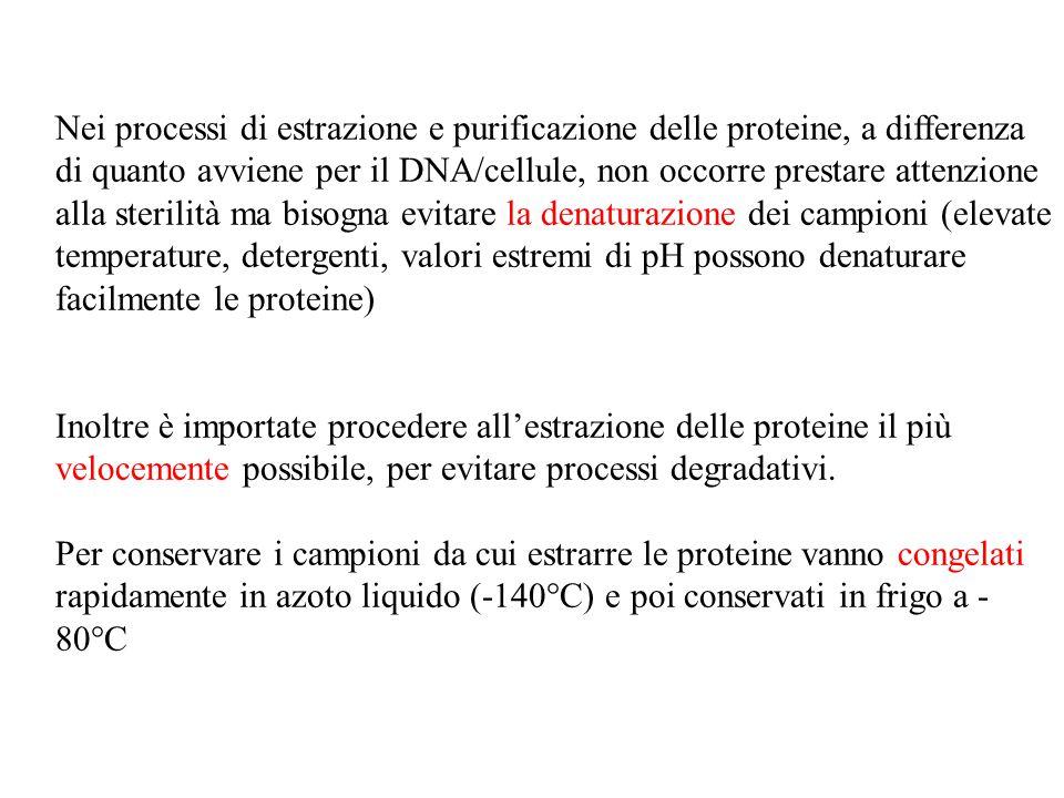 Nei processi di estrazione e purificazione delle proteine, a differenza di quanto avviene per il DNA/cellule, non occorre prestare attenzione alla sterilità ma bisogna evitare la denaturazione dei campioni (elevate temperature, detergenti, valori estremi di pH possono denaturare facilmente le proteine)