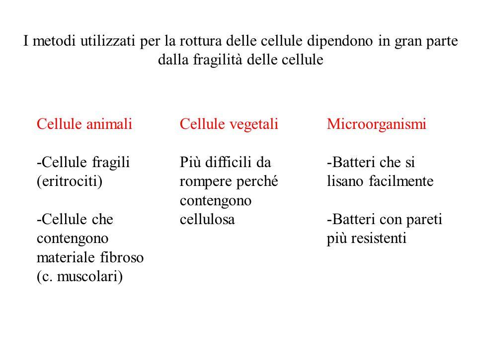 I metodi utilizzati per la rottura delle cellule dipendono in gran parte dalla fragilità delle cellule