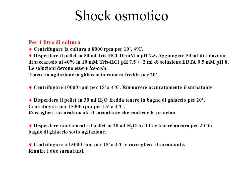 Shock osmotico Per 1 litro di coltura