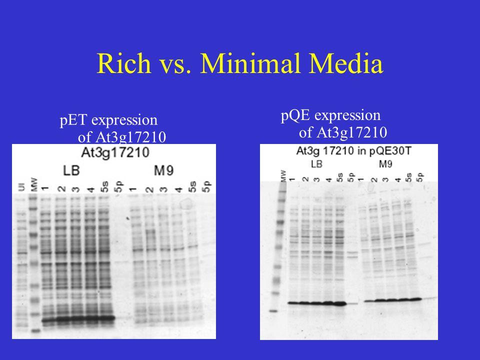 Rich vs. Minimal Media pQE expression of At3g17210