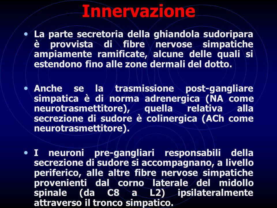 Innervazione