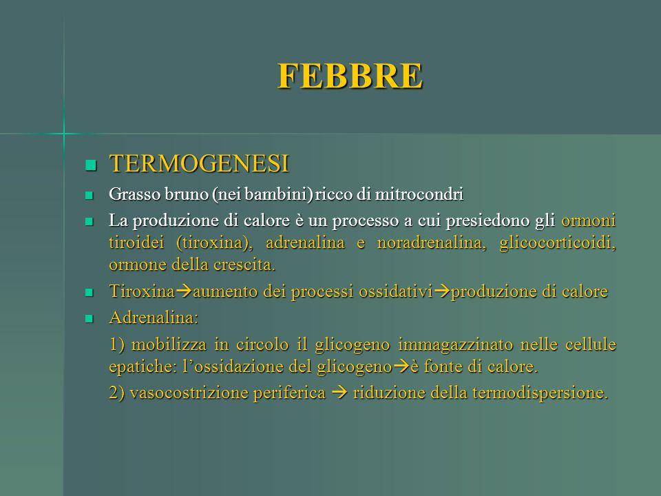 FEBBRE TERMOGENESI Grasso bruno (nei bambini) ricco di mitrocondri