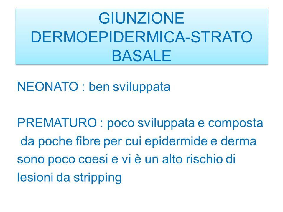 GIUNZIONE DERMOEPIDERMICA-STRATO BASALE