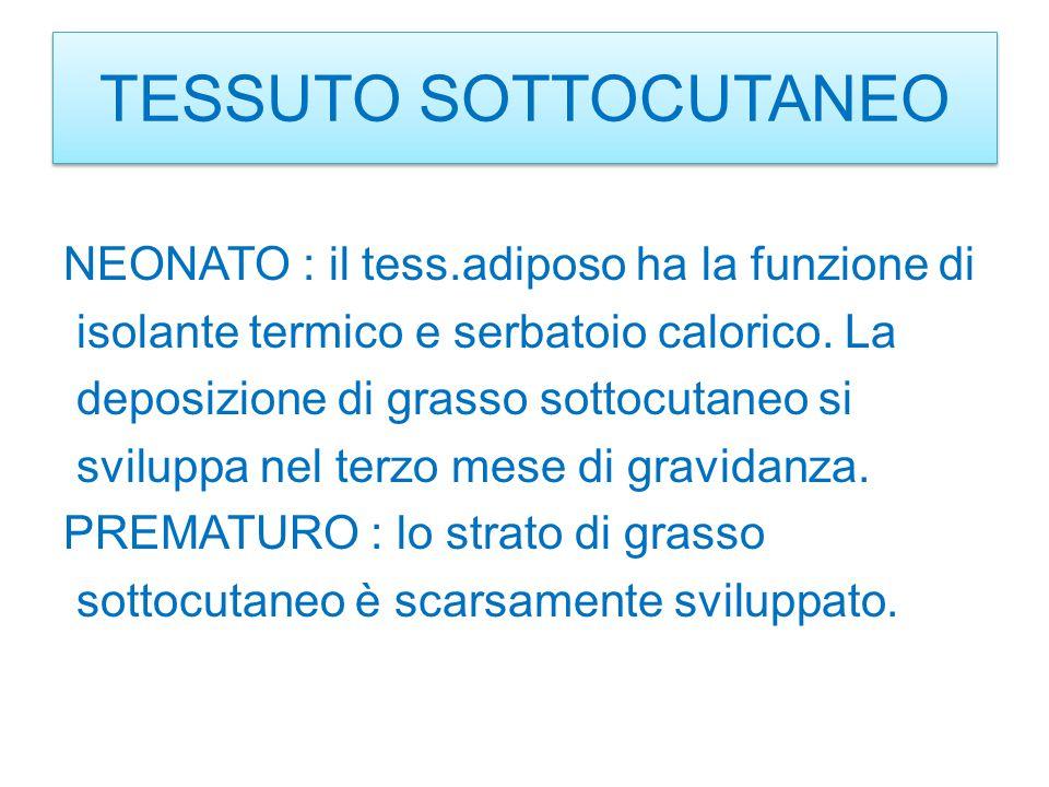 TESSUTO SOTTOCUTANEO