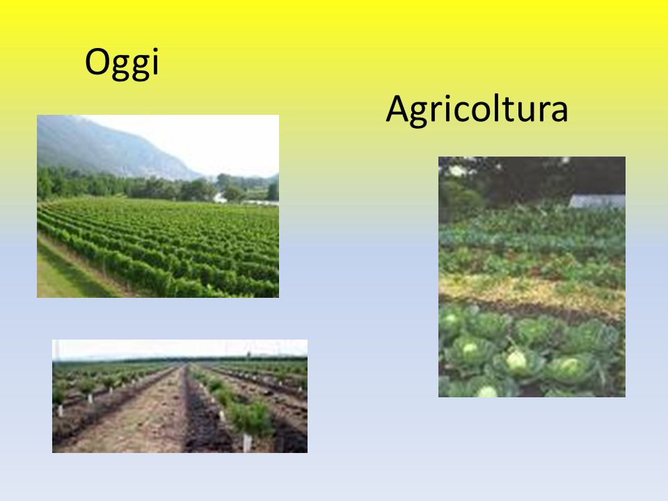 Oggi Agricoltura