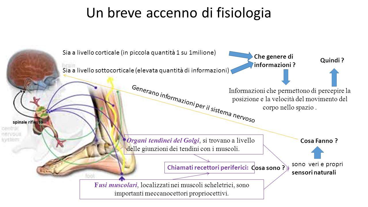 Un breve accenno di fisiologia