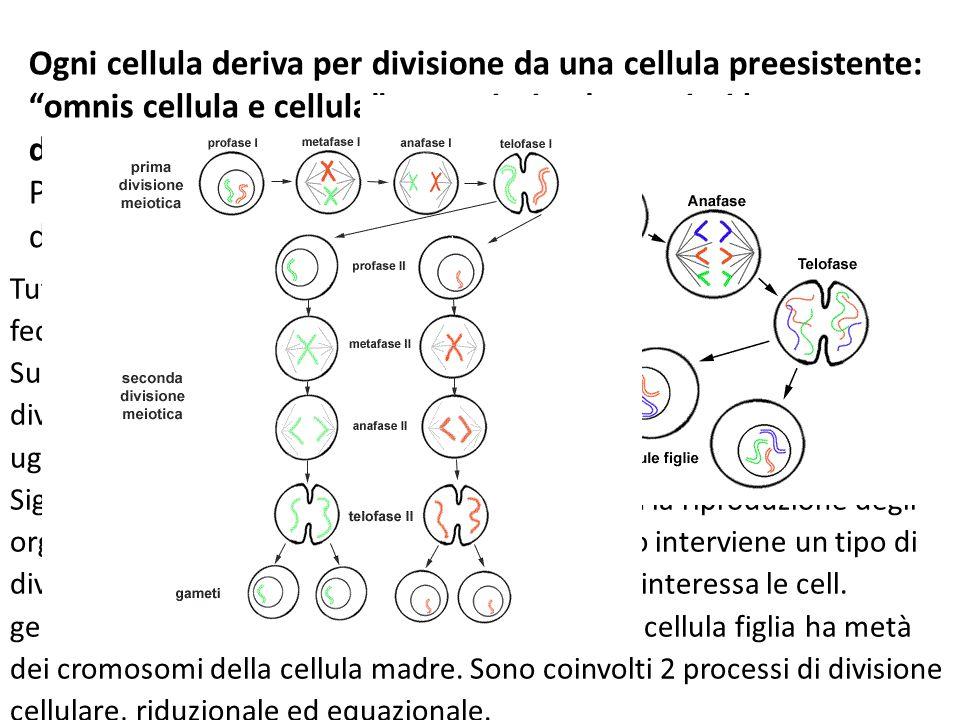 Ogni cellula deriva per divisione da una cellula preesistente: omnis cellula e cellula procarioti ed eucarioti hanno divisioni diverse. Negli eucarioti la divisione è più complicata Prima della divisione cellulare il DNA si duplica e, una volta duplicatosi il DNA, la cellula deve assolutamente dividersi.