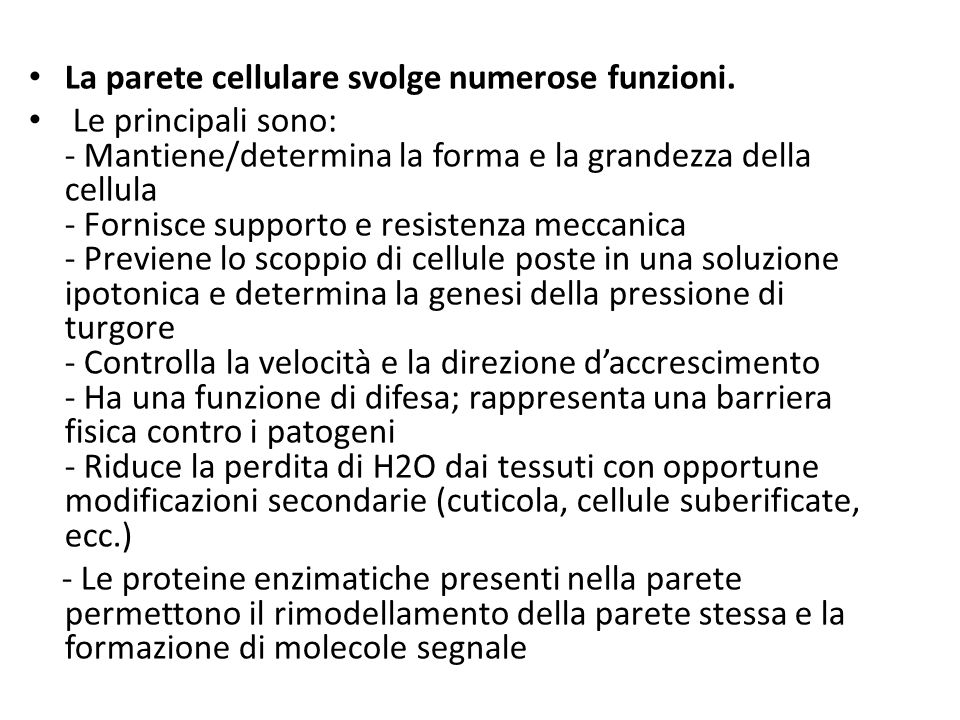 La parete cellulare svolge numerose funzioni.