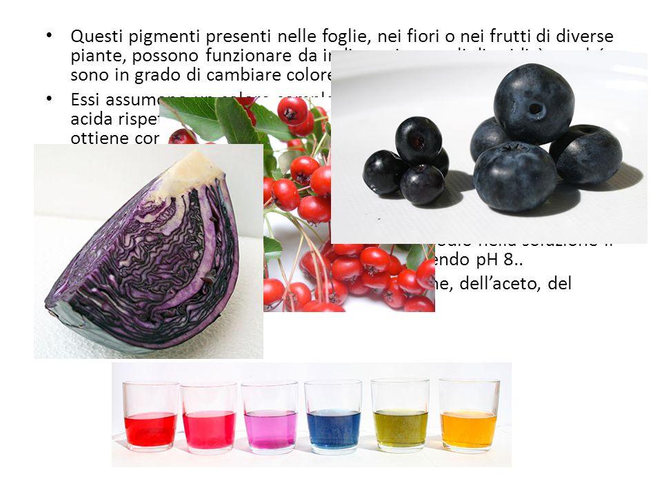 Questi pigmenti presenti nelle foglie, nei fiori o nei frutti di diverse piante, possono funzionare da indicatori naturali di acidità perché sono in grado di cambiare colore al variare del pH.