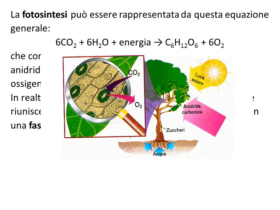 La fotosintesi può essere rappresentata da questa equazione generale: