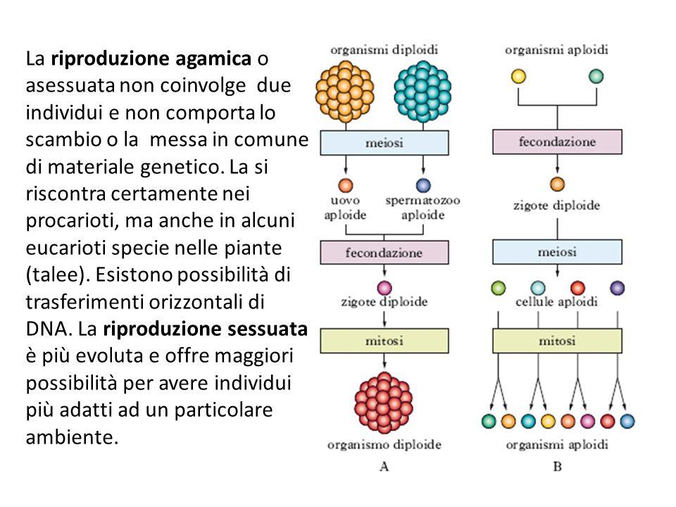 La riproduzione agamica o asessuata non coinvolge due individui e non comporta lo scambio o la messa in comune di materiale genetico. La si riscontra certamente nei procarioti, ma anche in alcuni eucarioti specie nelle piante (talee). Esistono possibilità di trasferimenti orizzontali di DNA. La riproduzione sessuata è più evoluta e offre maggiori possibilità per avere individui più adatti ad un particolare ambiente.
