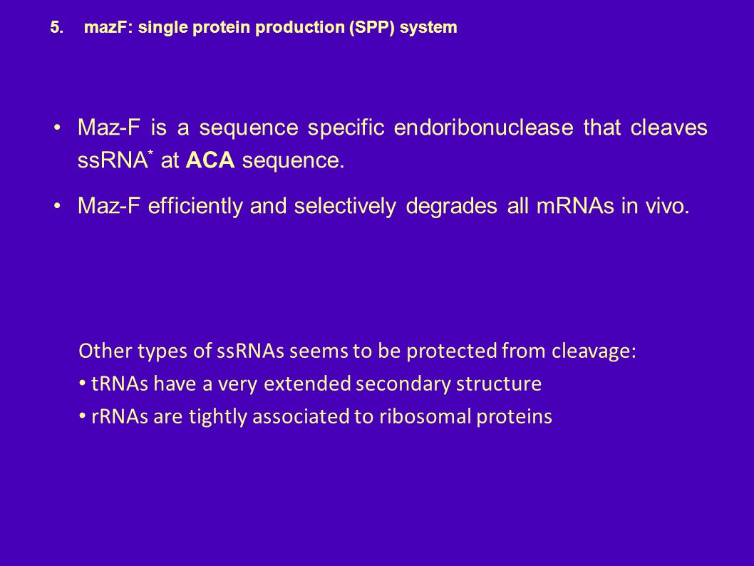 Maz-F efficiently and selectively degrades all mRNAs in vivo.
