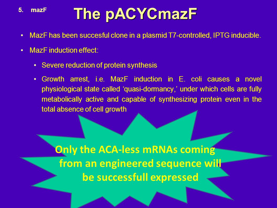 The pACYCmazF mazF. MazF has been succesful clone in a plasmid T7-controlled, IPTG inducible. MazF induction effect: