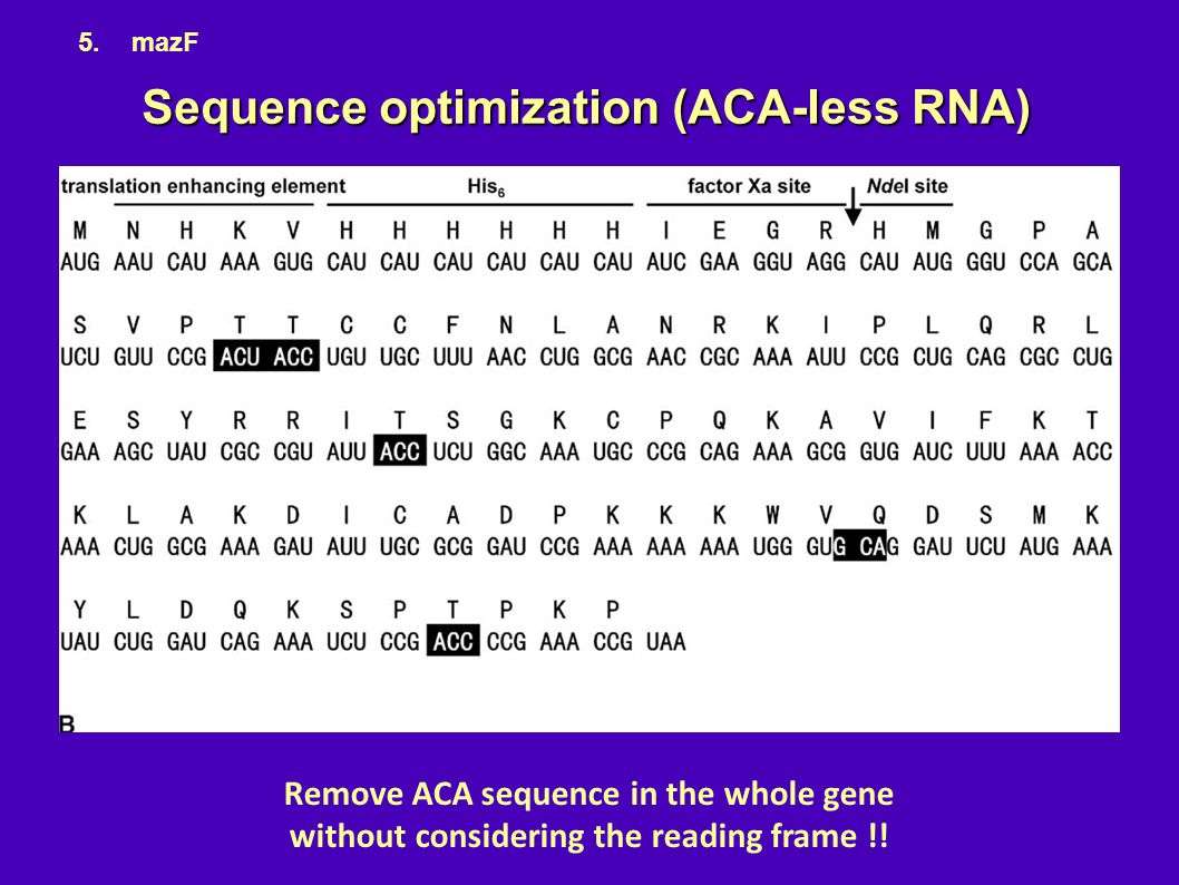 Sequence optimization (ACA-less RNA)