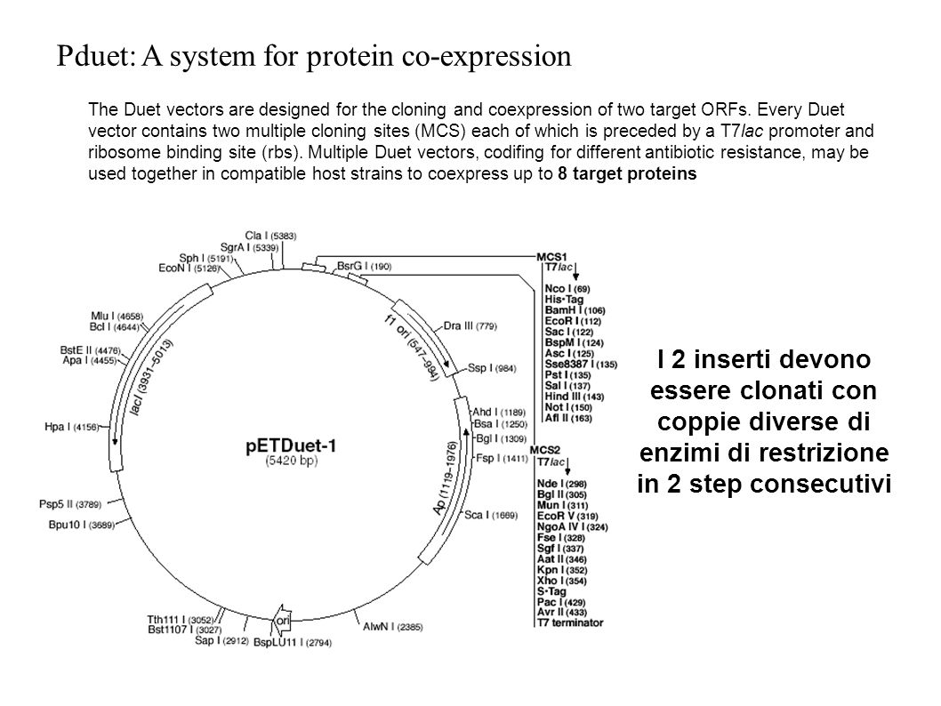 Pduet: A system for protein co-expression