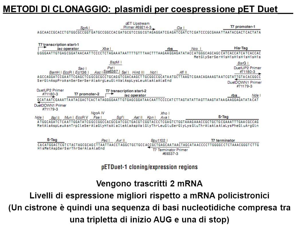 METODI DI CLONAGGIO: plasmidi per coespressione pET Duet___