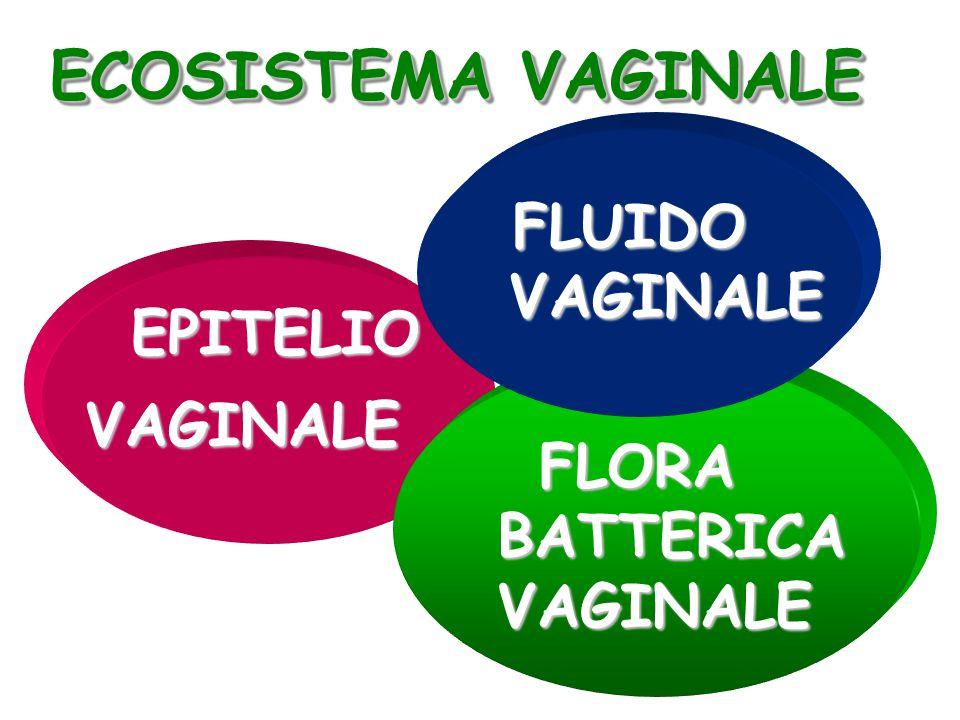 ECOSISTEMA VAGINALE VAGINALE VAGINALE EPITELIO