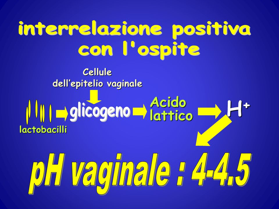 interrelazione positiva dell'epitelio vaginale