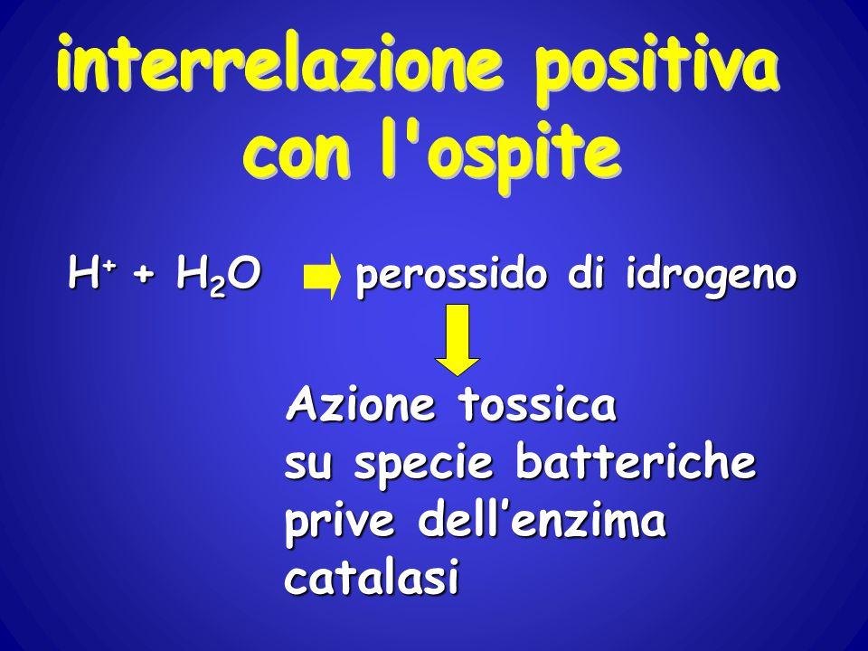 interrelazione positiva