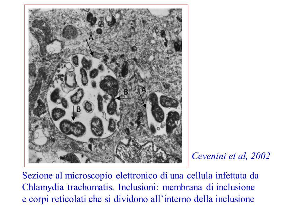 Cevenini et al, 2002 Sezione al microscopio elettronico di una cellula infettata da. Chlamydia trachomatis. Inclusioni: membrana di inclusione.