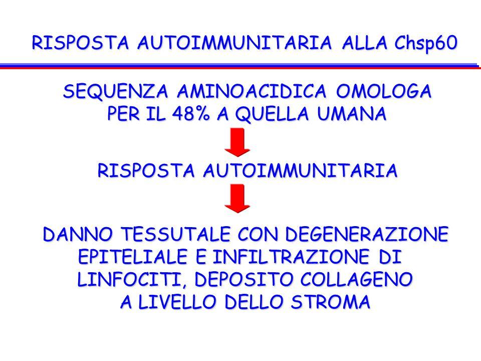 RISPOSTA AUTOIMMUNITARIA ALLA Chsp60