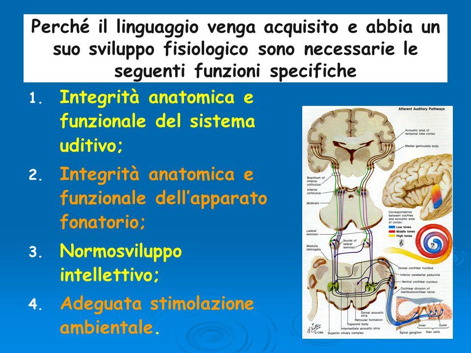 Perché il linguaggio venga acquisito e abbia un suo sviluppo fisiologico sono necessarie le seguenti funzioni specifiche