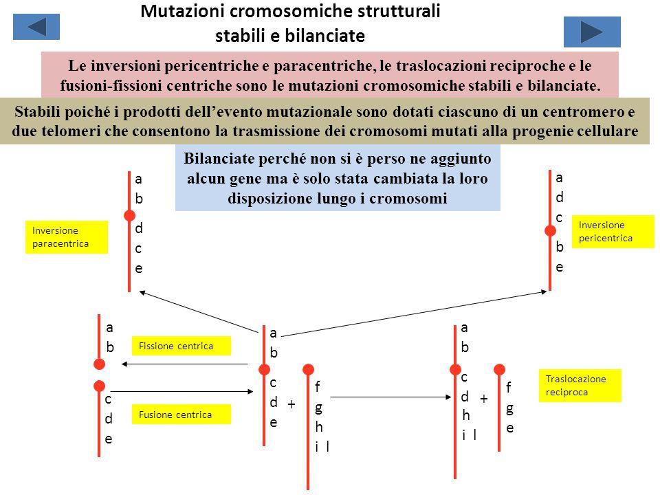 Mutazioni cromosomiche strutturali stabili e bilanciate