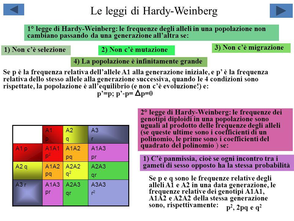 Le leggi di Hardy-Weinberg