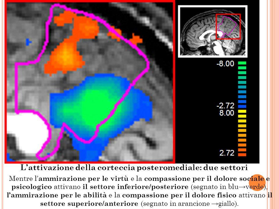L'attivazione della corteccia posteromediale: due settori