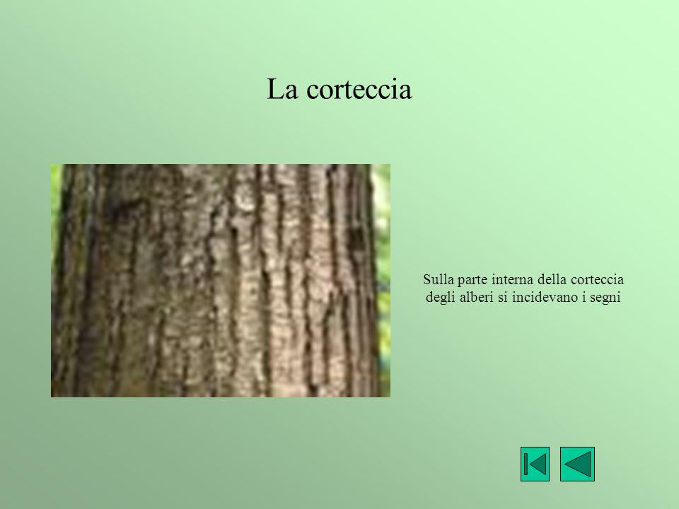 Sulla parte interna della corteccia degli alberi si incidevano i segni