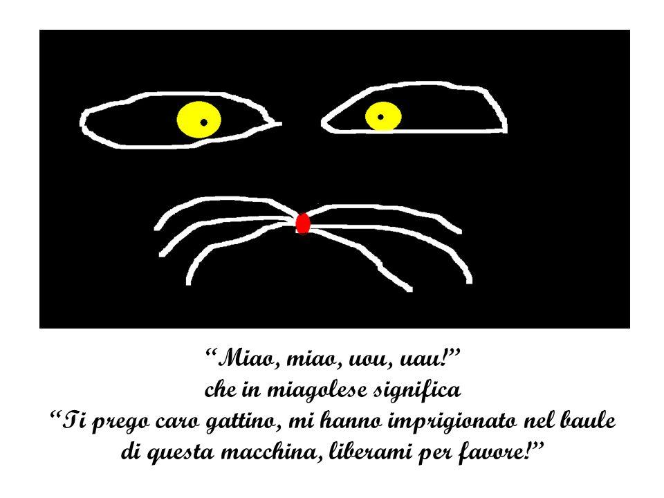 Miao, miao, uou, uau! che in miagolese significa Ti prego caro gattino, mi hanno imprigionato nel baule di questa macchina, liberami per favore!