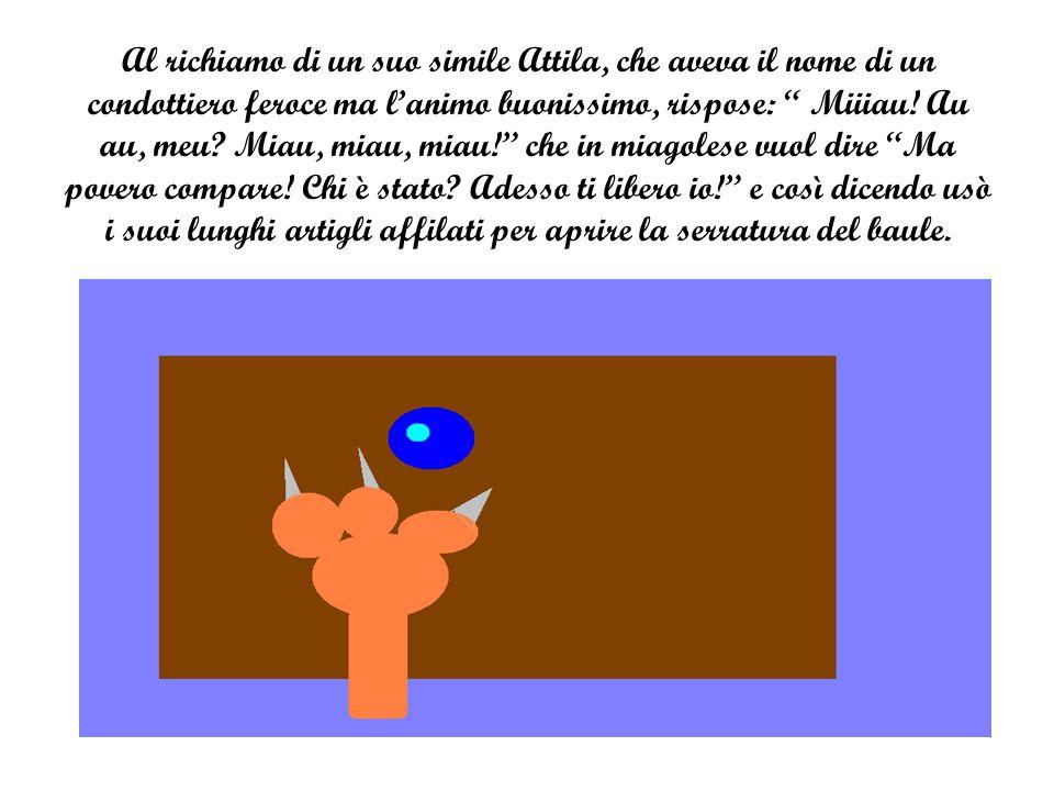Al richiamo di un suo simile Attila, che aveva il nome di un condottiero feroce ma l'animo buonissimo, rispose: Miiiau.