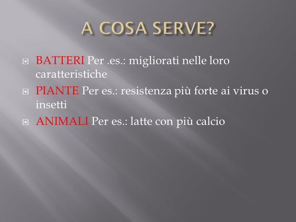 A COSA SERVE BATTERI Per .es.: migliorati nelle loro caratteristiche
