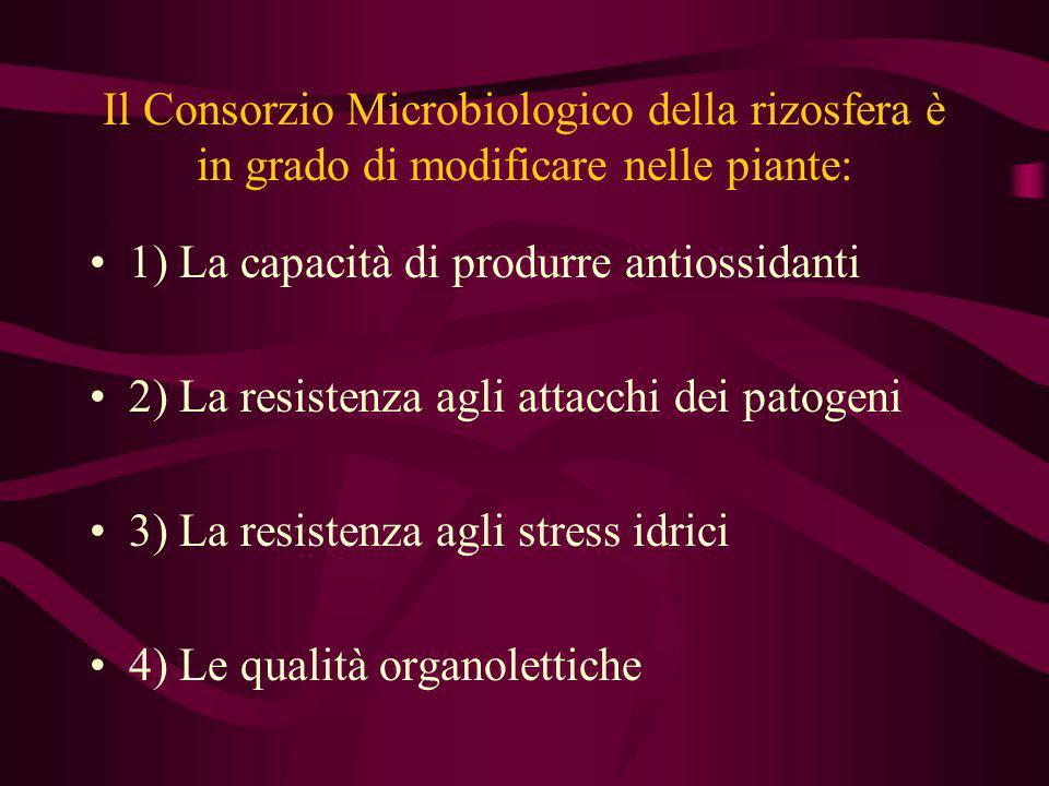 Il Consorzio Microbiologico della rizosfera è in grado di modificare nelle piante:
