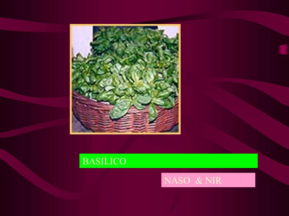 BASILICO NASO & NIR