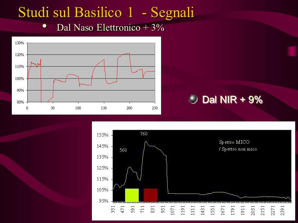 Studi sul Basilico 1 - Segnali