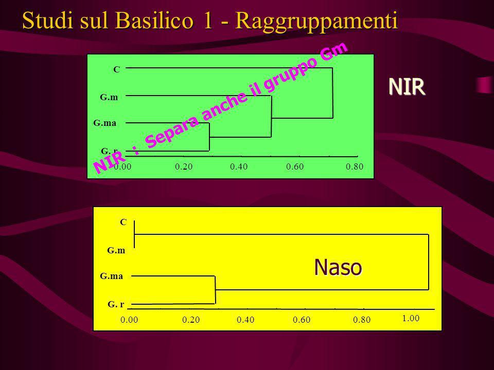 Studi sul Basilico 1 - Raggruppamenti
