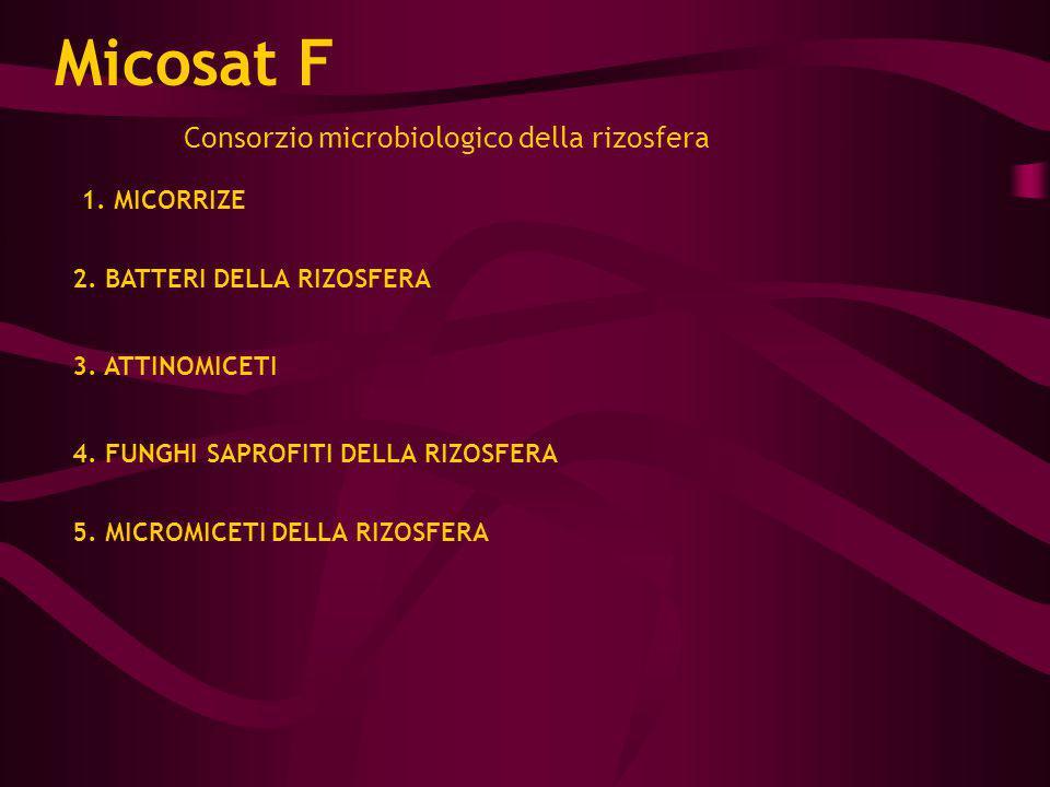 Consorzio microbiologico della rizosfera