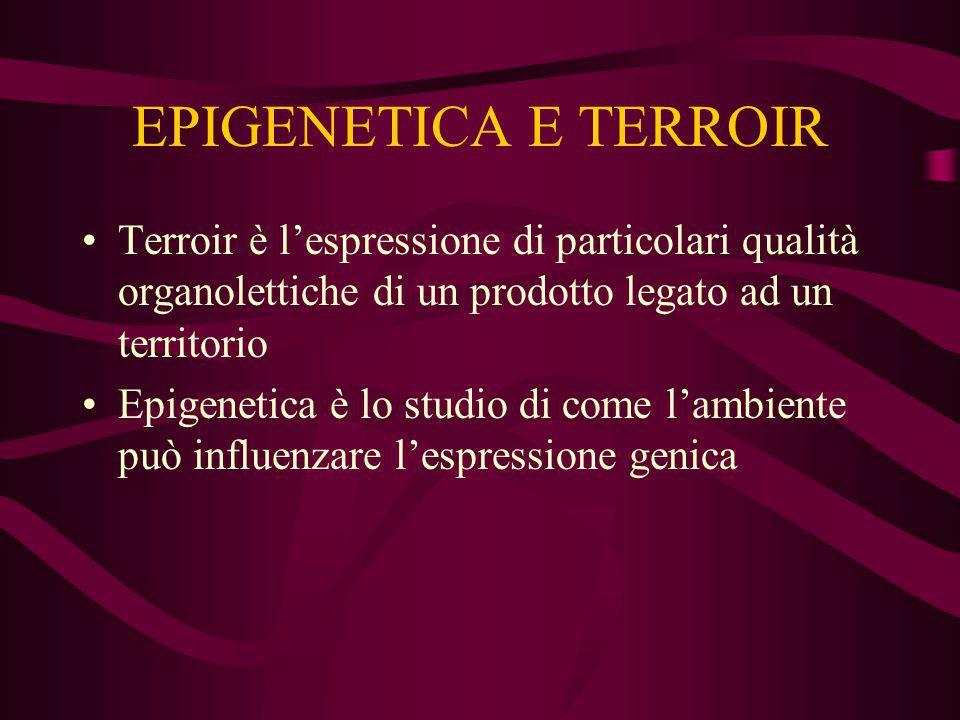 EPIGENETICA E TERROIR Terroir è l'espressione di particolari qualità organolettiche di un prodotto legato ad un territorio.