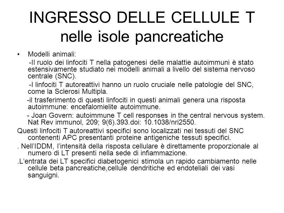 INGRESSO DELLE CELLULE T nelle isole pancreatiche