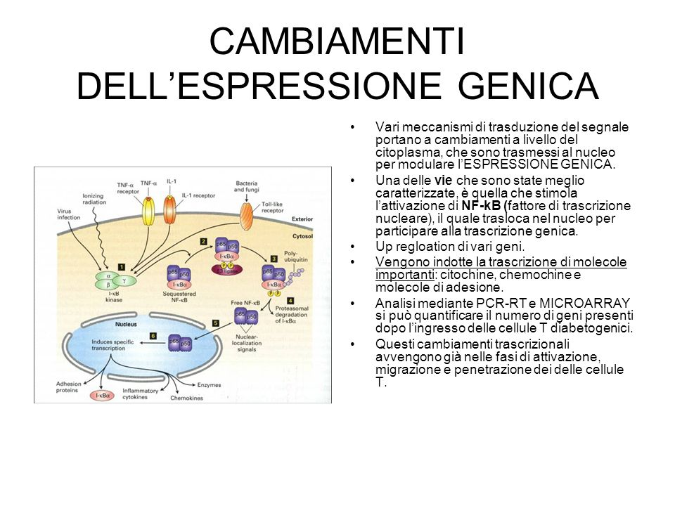 CAMBIAMENTI DELL'ESPRESSIONE GENICA